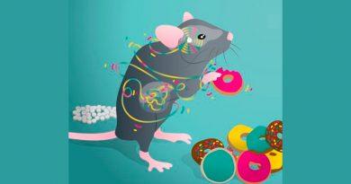 Identifican una nueva conexión entre el aparato digestivo y el cerebro