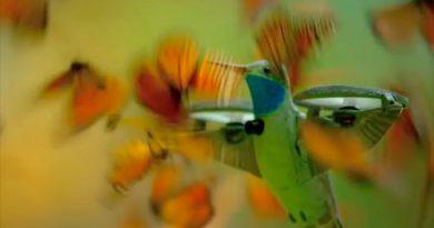 Graban un enjambre de miles de mariposas monarca desde dentro usando un dron disfrazado de colibrí [VIDEO]