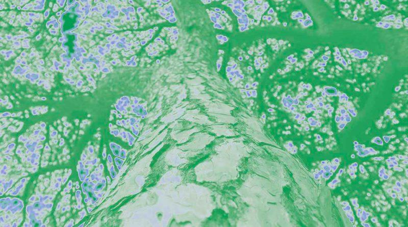 La marcha de los arboles: especies 'huyen' del calentamiento global