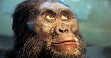 Los homínidos tenían cerebro de simio, pero crecía como el humano