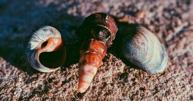 Científicos mexicanos descubren 2 nuevas especies de moluscos