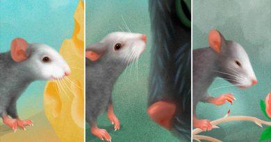 Los ratones también reflejan en su rostro las emociones que sienten