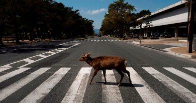 La ausencia de humanos por el Covid-19 da vía libre a los animales