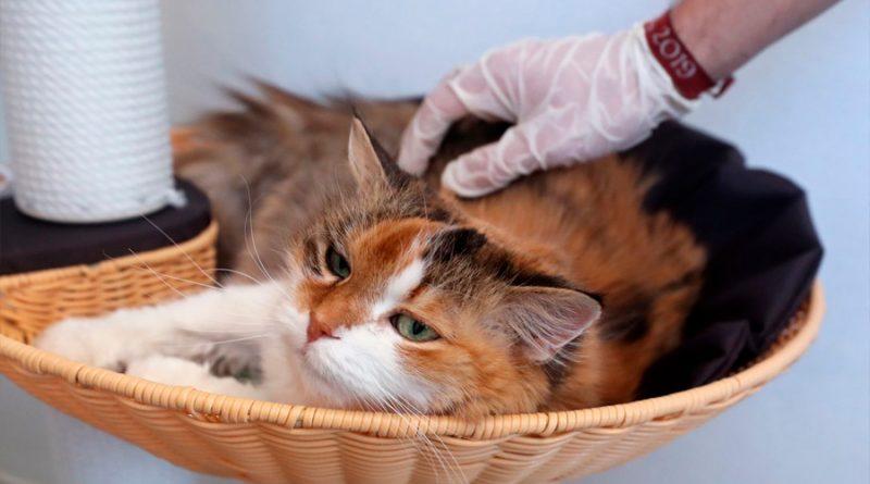 Dos perros, un gato y una tigresa: los inquietantes saltos del coronavirus a los animales
