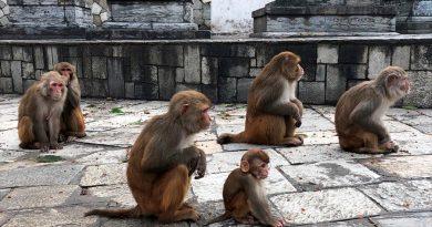 Al menos 142 virus han saltado de animales a humanos