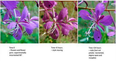 Algunas flores aprenden a recuperarse después de sufrir daños
