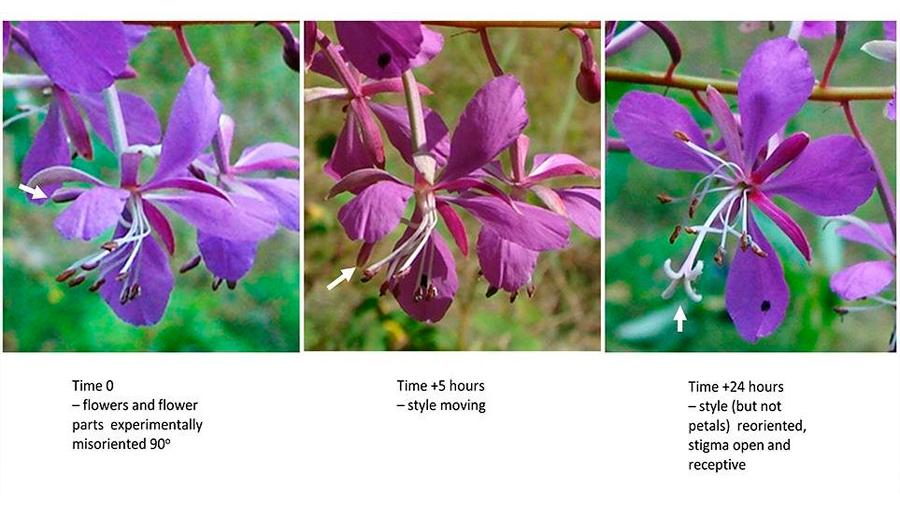 09-04-20-flores