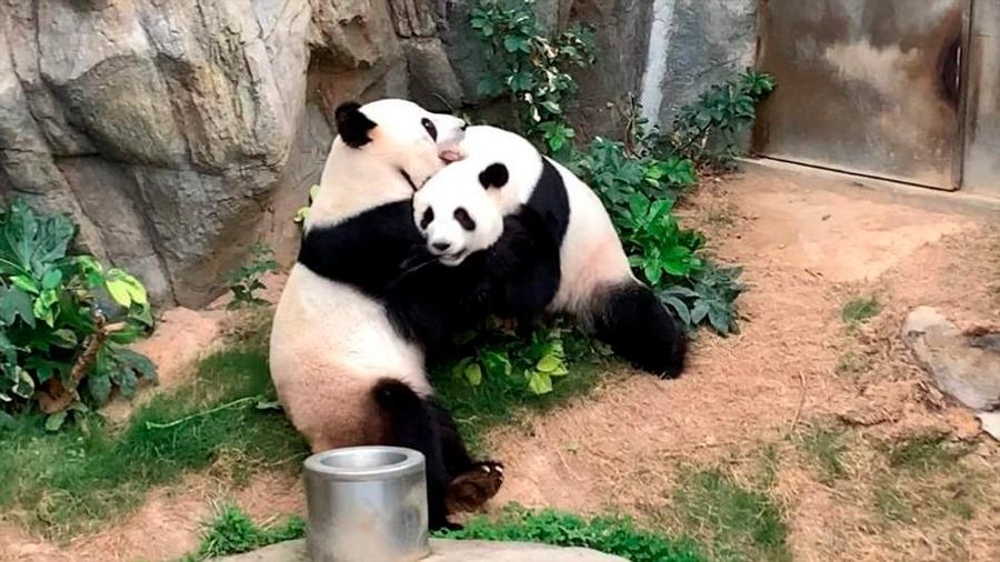 09-04-20-pandas