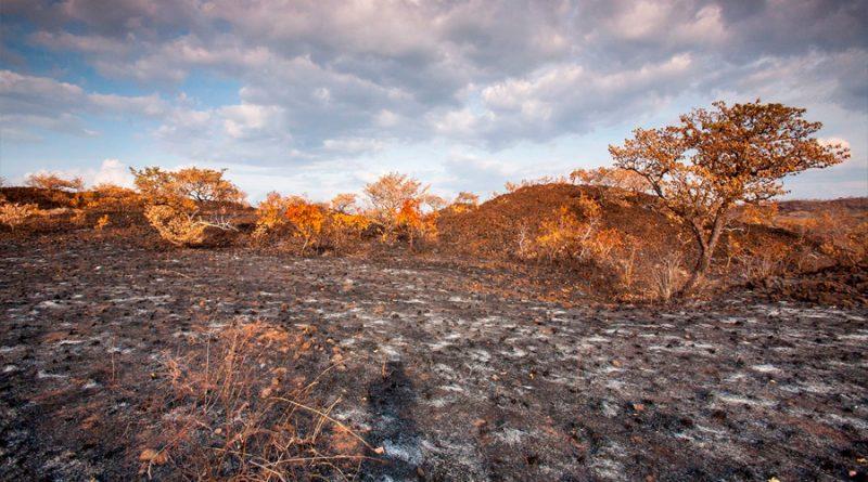 Los suelos de los ambientes áridos, ¿son realmente infértiles?