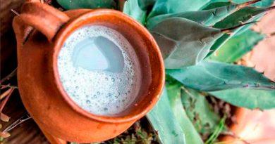 Bebidas tradicionales fermentadas de México: alto potencial biotecnológico