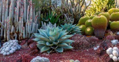 Descubren cómo las plantas se organizan para crecer en zonas áridas