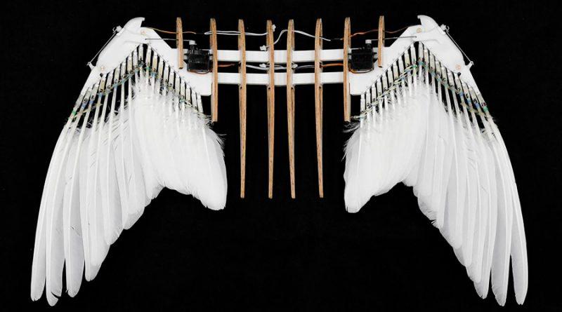 Robot inspirado en palomas podría encabezar la generación de vehículos autónomos voladores