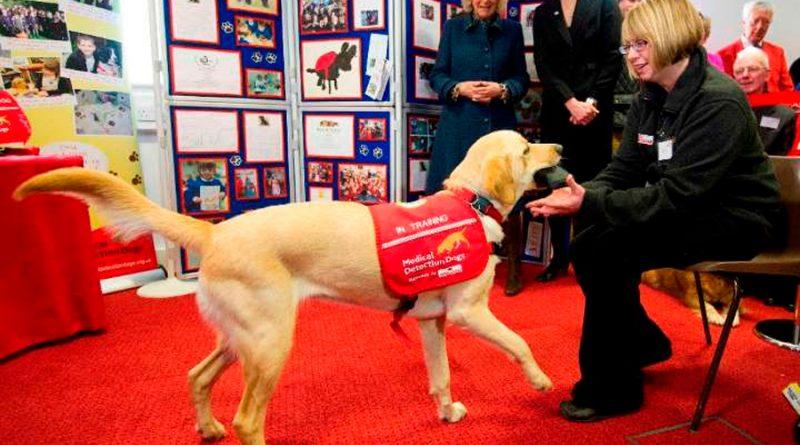 Investigadores británicos entrenarán a perros para detectar el coronavirus