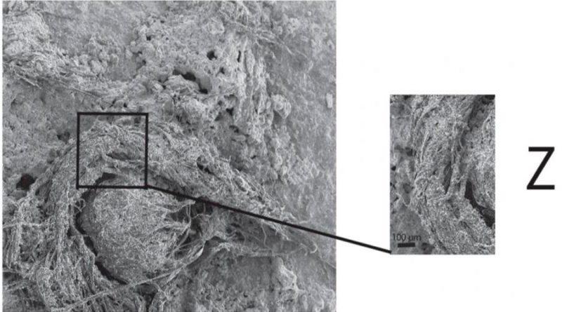 Encuentran un pedazo de cuerda que perteneció a los neandertales