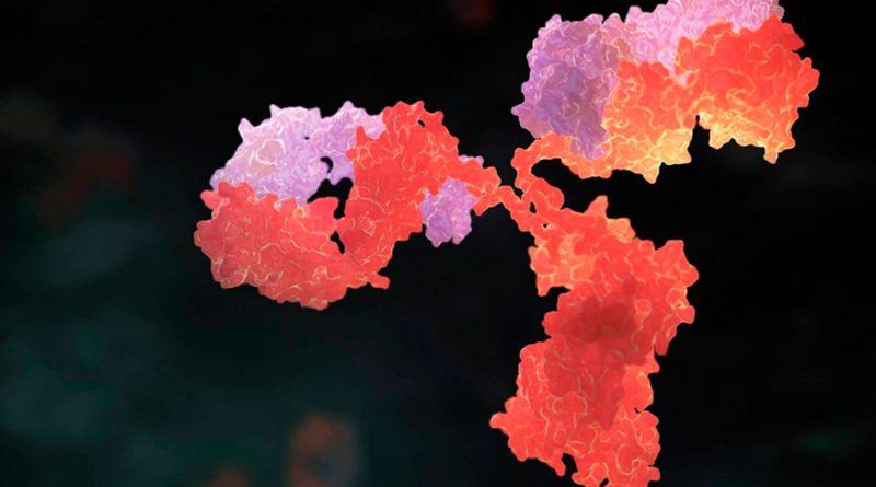 La Inmunoglobina G, el anticuerpo clave para determinar si una persona ya no contagia el coronavirus