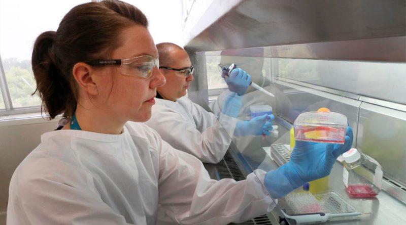 Investigan si las células inmunes hiperactivas causan la muerte por coronavirus