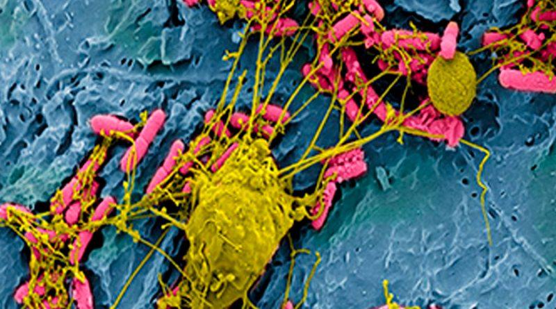 Identifican un nuevo gen que otorga a las bacterias resistencia antibiótica