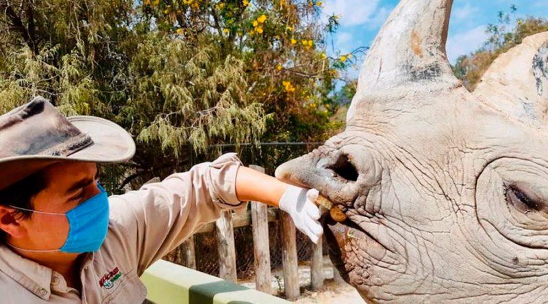 México: Zoológicos, criaderos y acuarios intensifican medidas preventivas por Covid-19