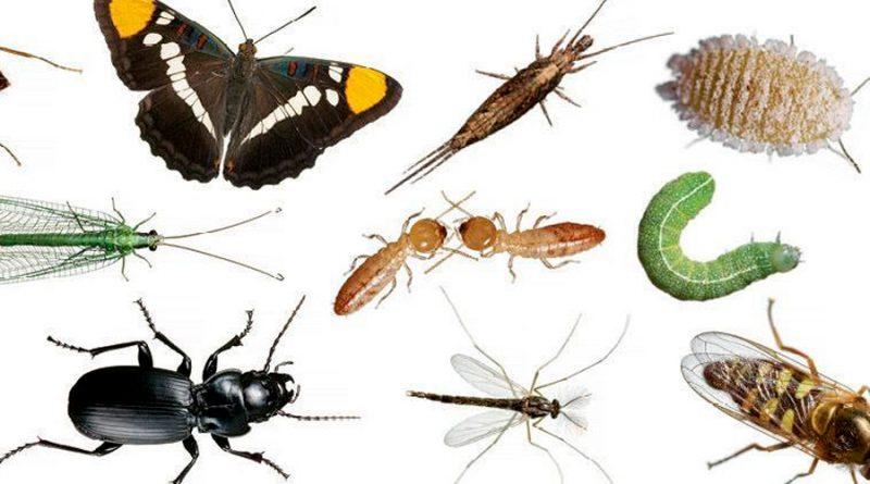 El mundo perdió 27% de insectos terrestres en 30 años