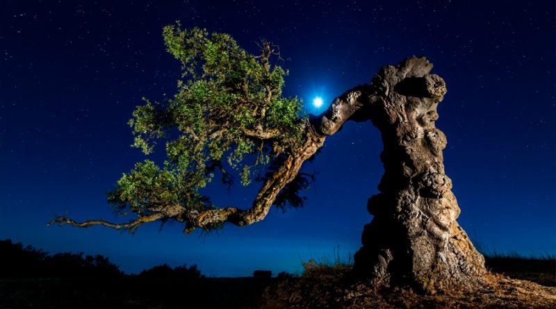 Los árboles también duermen, según un estudio
