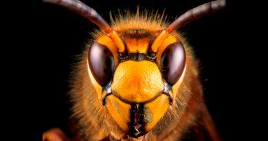 """El """"apocalipsis"""" de los insectos no es tan grave como se creía"""
