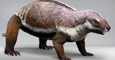 Descubierto en Madagascar un extraño mamífero de hace 66 millones de años