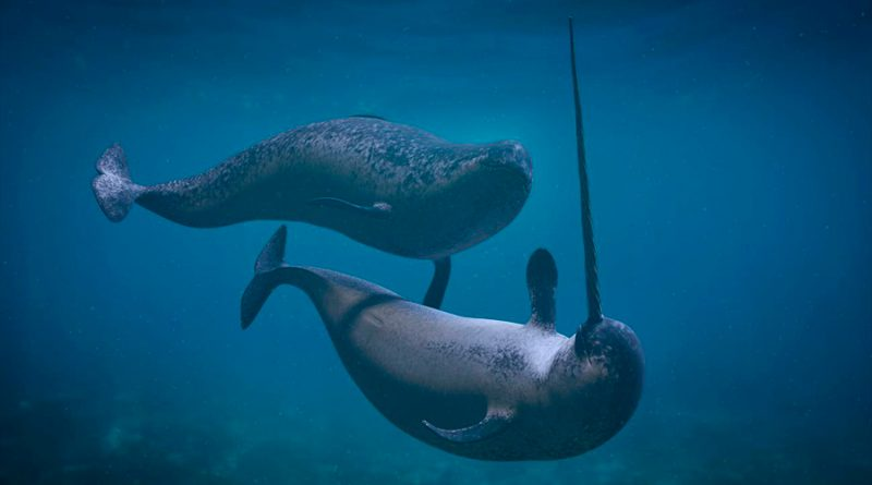 Capturados los extraños sonidos de los unicornios del mar