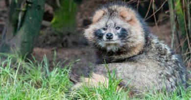 Ni murciélago ni pangolín: éste es el animal que podría haber traído el coronavirus