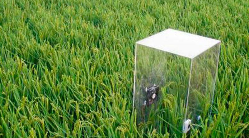 Crean una jeringuilla para tratar enfermedades de las plantas como en un hospital