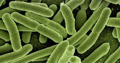 La efímera vida de una bacteria: en 3 días acumula tantas generaciones como toda la historia humana