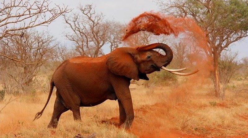 Descubren la razón por la que elefantes y otros animales se emborrachan tan fácilmente