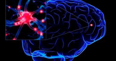 Diseñan unas prótesis neuronales que reemplazan partes del cerebro dañadas