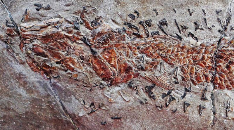 Una criatura parecida a un calamar devora a su presa en este fósil de hace 200 millones de años