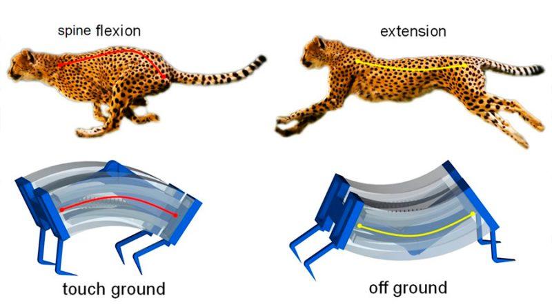 Nuevos robots guepardo que galopan se mueven tres veces mas rápido