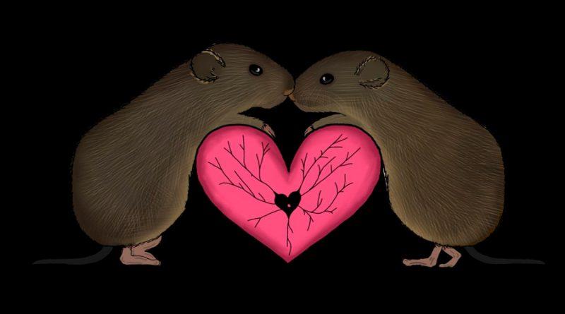 Un patrón cerebral rige la formación de pareja