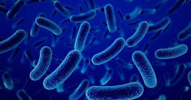Demuestra estudio que las bacterias pueden almacenar información