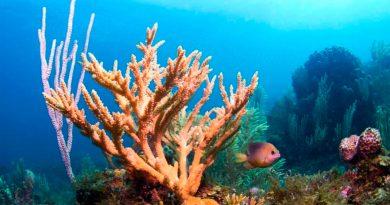 Coral de laboratorio resistente al cambio climático