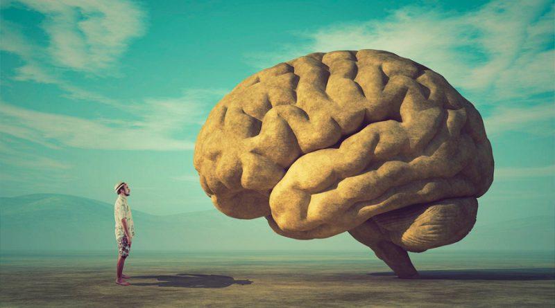 Qué reveló el experimento sobre la inteligencia más grande del mundo