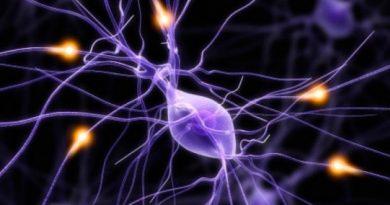 Investigadores diseñan prótesis neuronales que reemplazan partes del cerebro dañadas