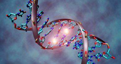 Hallan enzima clave para reparar el daño del ADN relacionado con la edad