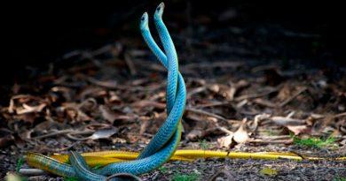 Las serpientes pueden formar amistades según nueva investigación