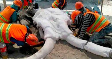 Mexico: hallan restos de 60 mamuts en área del nuevo aeropuerto de Santa Lucía
