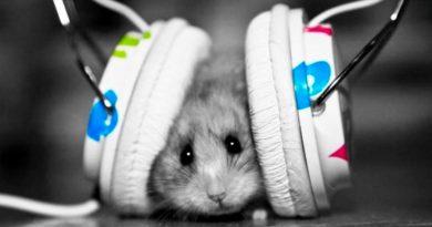 Algunas especies de roedores identifican el ritmo de las canciones