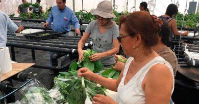 Sistema agroacuícola integrado para contribuir a la seguridad alimentaria y a la inserción de la mujer