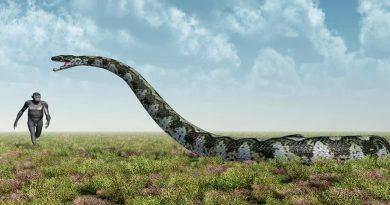 Serpiente prehistórica que comía cocodrilos y era del tamaño de un autobús
