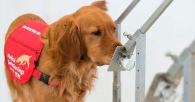 Perros entrenados detectan efectivamente Covid-19 en humanos