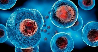 Células madre, esperanza congelada