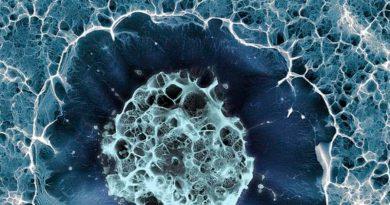 Diseñan células humanas transparentes que funcionan como el camuflaje animal