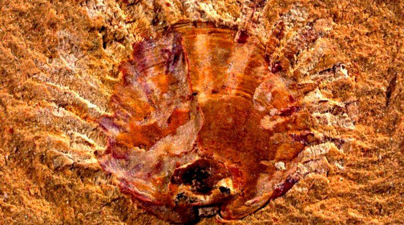 Los primeros parásitos conocidos vivieron hace 500 millones de años en China