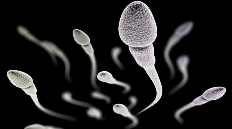Descubren una nueva proteína que 'activa' el esperma para la fertilización
